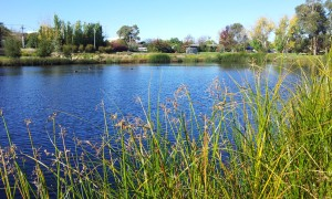 Lyneham Wetlands2